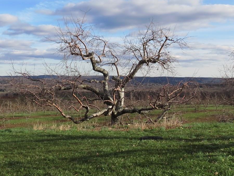 by Richard Hayward - Nature Up Close Trees & Bushes