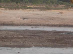 Photo: Two more crocodiles in the waterhole, so creepy!
