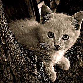KittyCat by Pieter J de Villiers - Black & White Animals