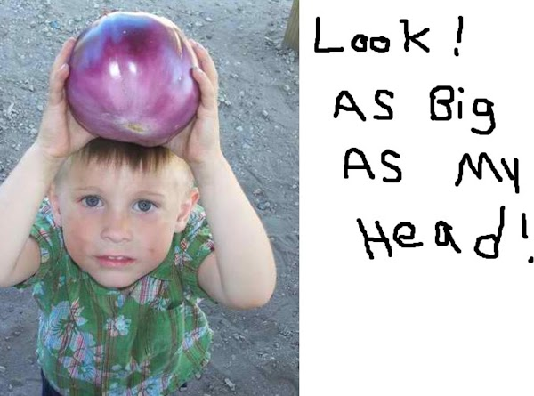 Ashton was very proud of this big eggplant, and exclaimed,