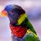 bird closeup 1707.png