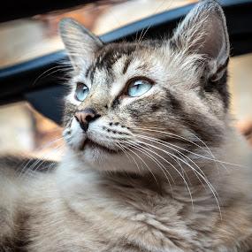 catt by Karoner Gaming - Animals - Cats Portraits