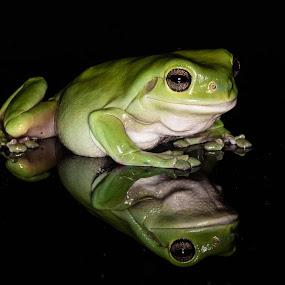 Kermit by Mark Molinari - Animals Amphibians ( frog, amphibians,  )