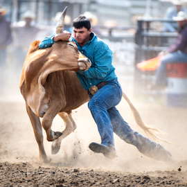 Steer Wrestling by Bob Grandpre - Sports & Fitness Rodeo/Bull Riding ( rodeo, steer, cowbow, horns, twist )
