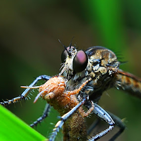 by Zul Musa - Animals Insects & Spiders