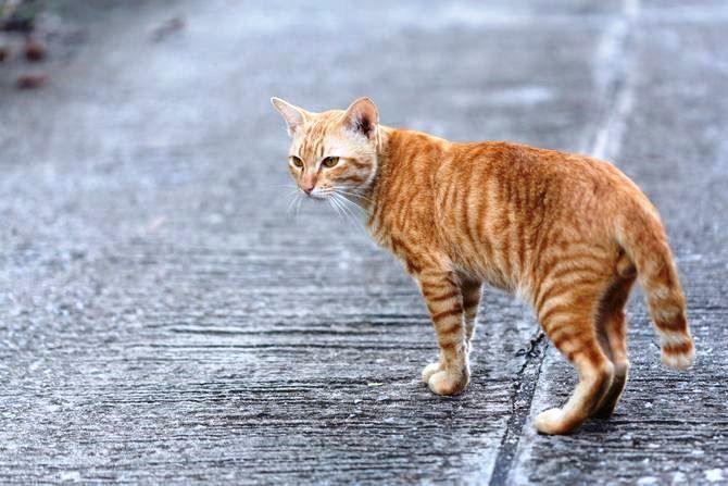 Warum gehen Katzen
