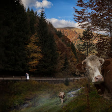 Wedding photographer Tudor Lazar (tudorlazar). Photo of 31.10.2016