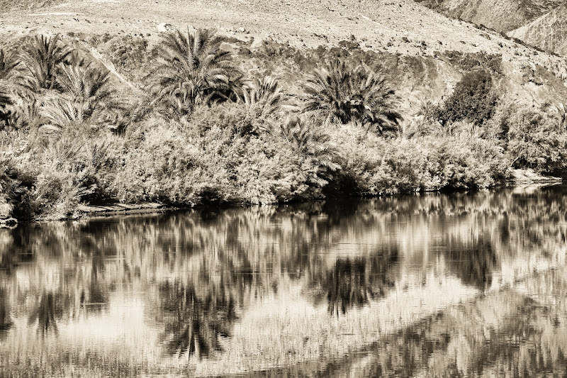 Photo: Palm reflections in the Draa river in the Draa valley, Morocco.