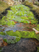 Photo: Cool stream covered in moss.
