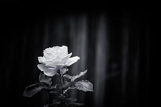 Photo: goodnight...  #bwphotography  #monochromeworld  #monochrome  #flowers  #floralphotography