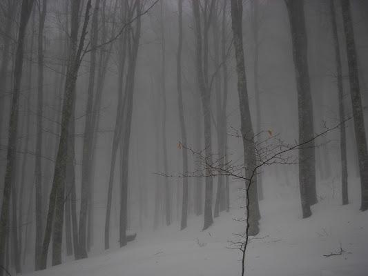 Neonato smarrito tra la nebbia..... di claudio_sposetti