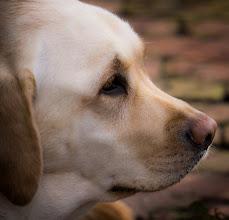 Photo: Loyal as a Dog -- Washington, D.C.