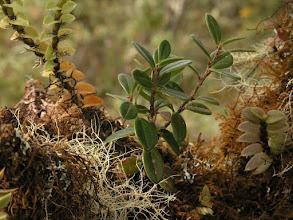 Photo: More epiphytes