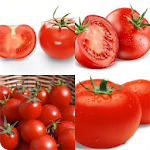 quiz fruit and vegetables Icon