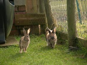 Photo: Bunny & Binky