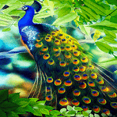 Peacock Beauty Live Wallpaper