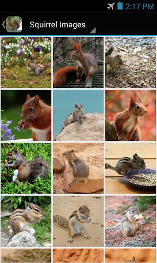 SquirrelBG: Squirrel Wallpaper