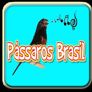 Pássaro Som Armazém Brasilia - náhled