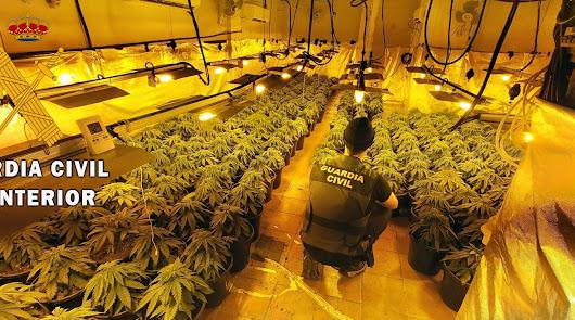 Un cultivo de marihuana en una vivienda junto a un colegio en Roquetas de Mar