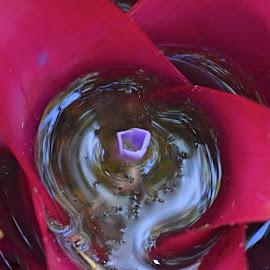 Bromeliad swirl by Amanda Daly - Novices Only Flowers & Plants