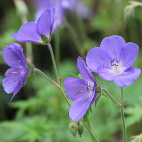 by Wesley Nesbitt - Flowers Flowers in the Wild