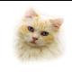 Кошки for PC-Windows 7,8,10 and Mac