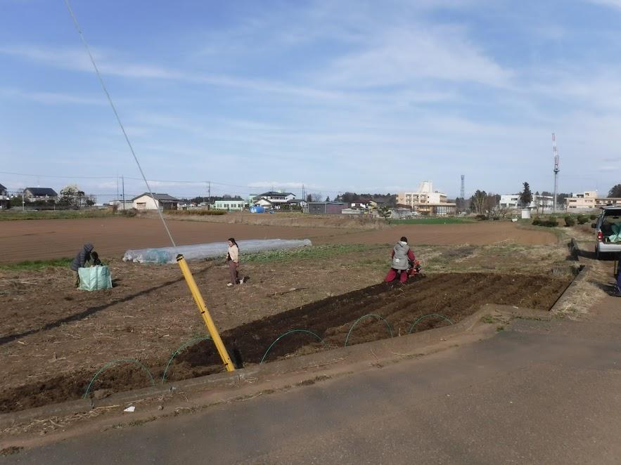 3/24 うさぎの畑、ネギ予定地の片づけと耕耘