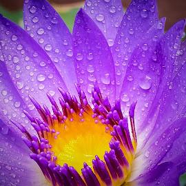 Focus by Rudesphere Corminal - Flowers Flower Gardens