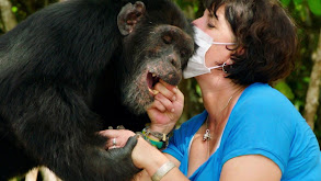 Estelle's Favorite Chimp thumbnail