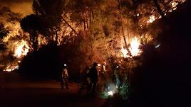 El incendio forestal declarado en Sierra Bermeja, en Málaga.
