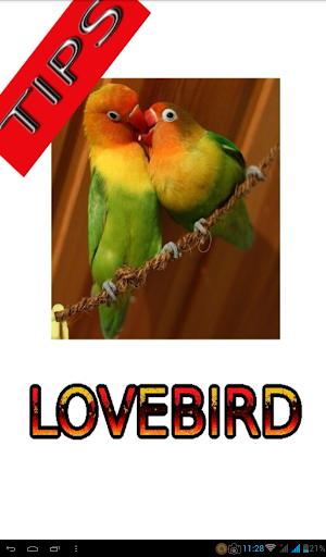 Tips Perawatan Burung Lovebird