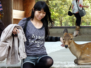 Photo: Deer sitting at the temple gate.