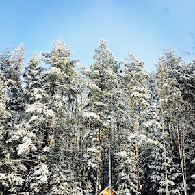#winter #magic #forest #belarus by Dauhalevich Valeria - Landscapes Forests