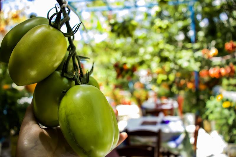 L'arte dei pomodori di rorea