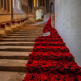 Carpet of Poppies. by Simon Page - Buildings & Architecture Places of Worship