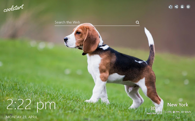 Beagle HD Wallpapers Dogs and Puppies Theme