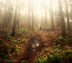 Photo: A Quiet Walk  This is an older image taken in Delemer Forest very early one morning, it was a cold autumnal day with fog patches coming and going but I recall it was cold. I thought I was on my own until I saw this gentleman walking his dog and got him in a shot being here at this time of day is a wondrous place to be, you feel like you are the only person on the earth.