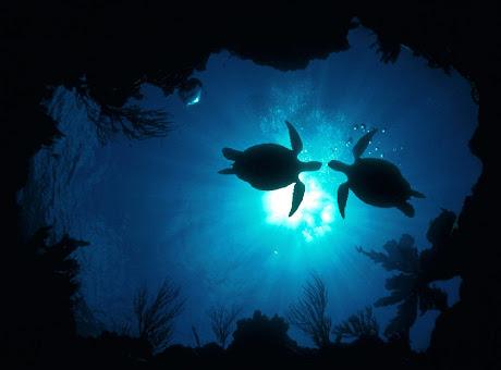 Oceanic - Sabine's Themes