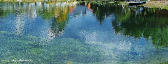Photo: Cool, clear, natural waters.  When we set up the ecology, the pond does the rest of the work.  There are no filters nor additives in this water.  There is only science and nature.