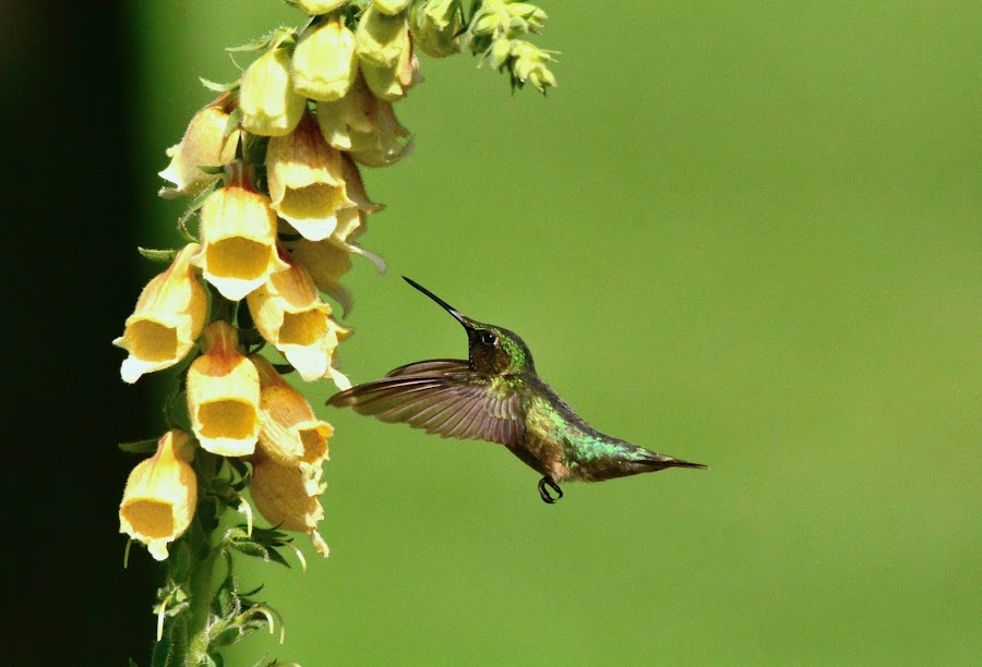 Feeding On The Bells by Thomas Mckibben - Uncategorized All Uncategorized (  )