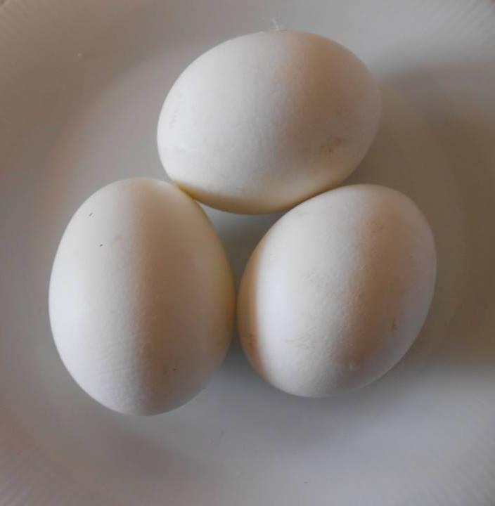 e' nato prima l'uovo o la gallina? di luisa_navalesi