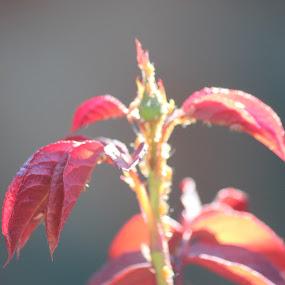 a new begining by Christiaan Bossert - Flowers Flower Buds (  )