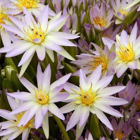 by Arun Acharya - Nature Up Close Flowers - 2011-2013
