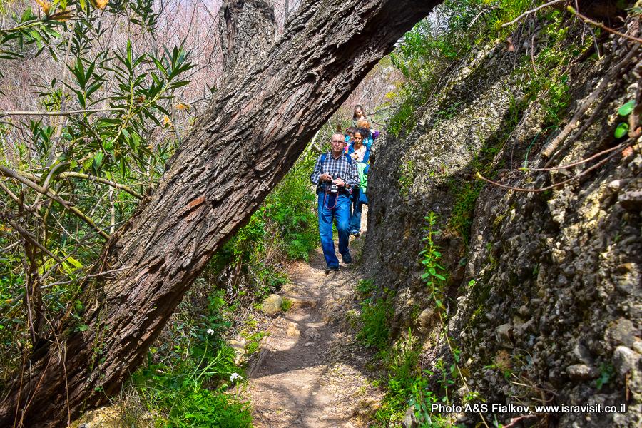 Экскурсия в национальном парке Израиля Нахаль Аюн.