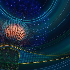 Super Tree Light Trail by Maskun Ramli - Buildings & Architecture Bridges & Suspended Structures