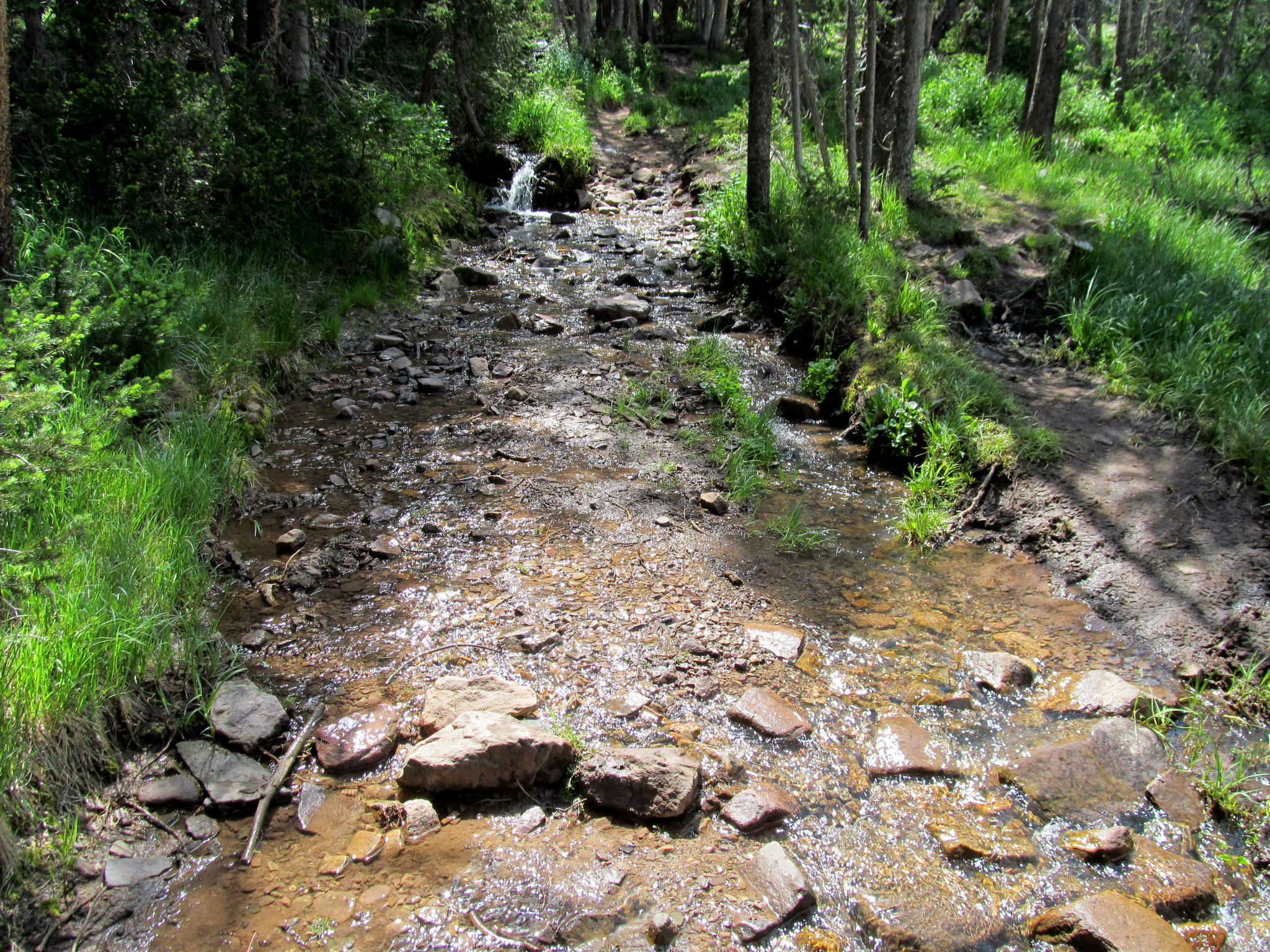 Photo: Stream running over the trail