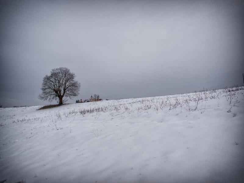 La vecchia quercia di alessandroaccossato
