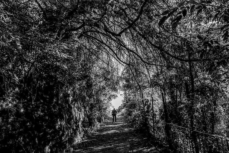 Ho perso la via... di Tiziana Detoni