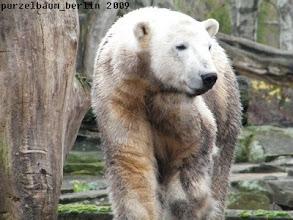 Photo: Ein gruebelnder Marmor-Knut ;-)
