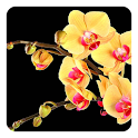 Exotic Flowers Live Wallpaper icon